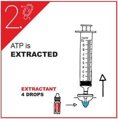ATP test - 4 step protocol (2)