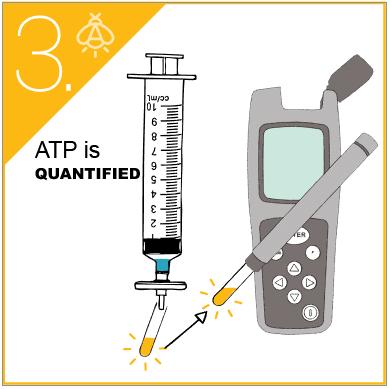 ATP test - 4 step protocol (3)