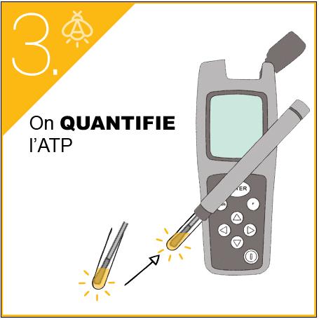 ATP-métrie DENDRIDIAG surface protocole (3)